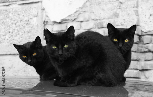 tree black cats