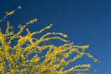 arizona yellow blue poster