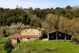 Fototapeta rural life
