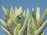 plante cactus poster