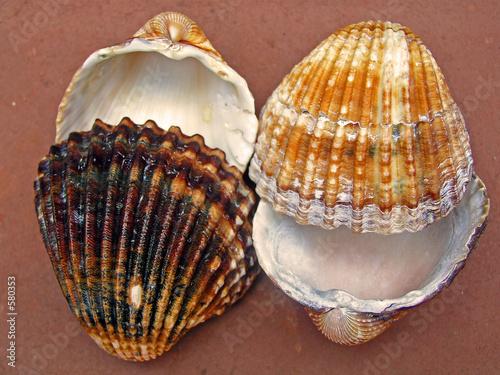 las conchas mas hermosas del mundo !