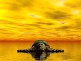 resting turtle poster