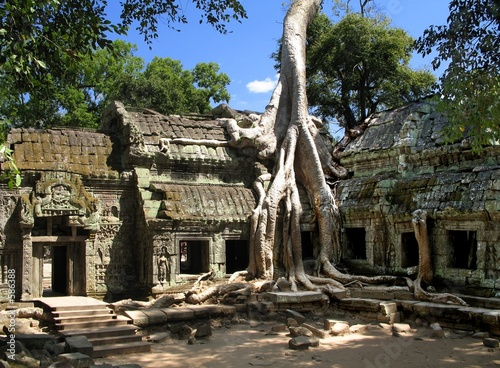 a silk-cotton tree consumes the ancient ruins of t