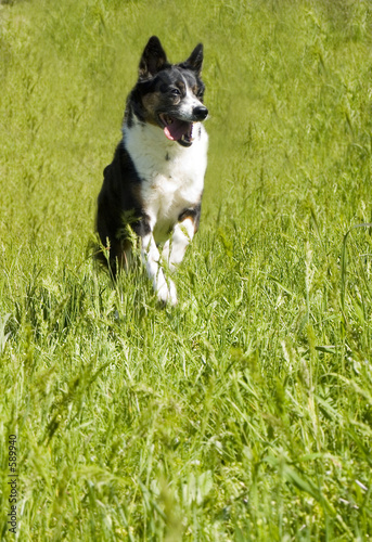 poster of dog running through field