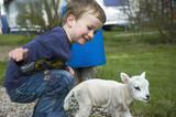 little boy and little sheep poster
