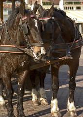pair of horses