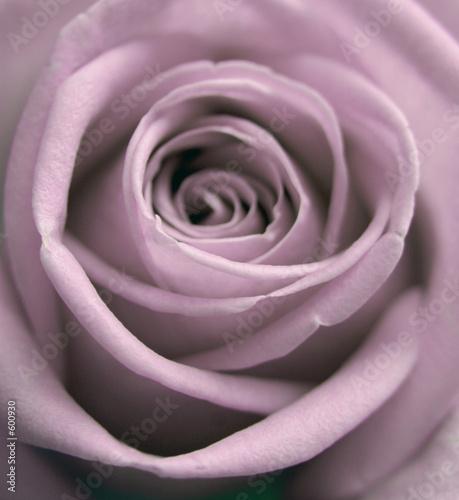 Naklejka pastelowych róży