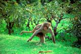 running monkey poster