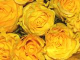 bouquet de roses orangées poster