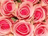 bouquet de roses roses poster