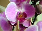 Fototapety orchideenblüte
