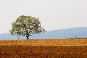 tree and farmland
