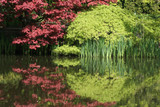 beautiful tree and pond poster