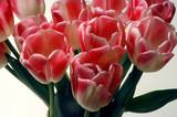 bouquet de tulipes poster