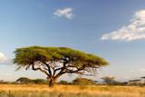 Fototapeta niebieski - krzewów - Drzewo