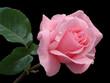 Fototapete Gärten - Hochzeit - Blume