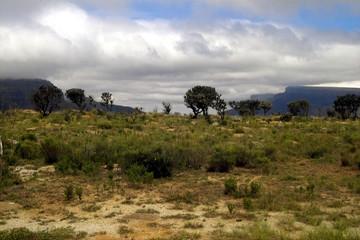 steppe afrikas