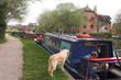 narrowboats & dogs - 620976