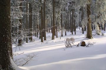 weihnachten - verschneite waldlandschaft