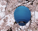 blue lantern and flowers poster