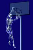 basket anatomia