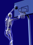 basketball anatomy - close cropped poster