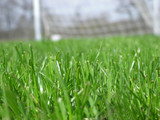 green grass with soccer net