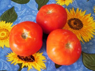 tomatoes - sunflower background