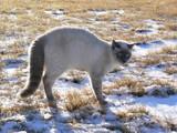 backlit fraidy cat poster