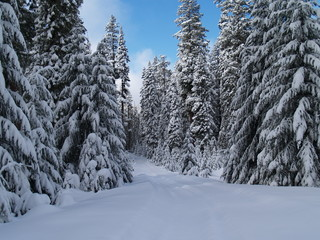 oregon snowy trail