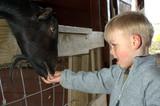 kid feeding animal poster