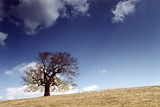 spring landscape with alone tree poster