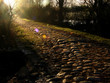 stone path on morning light