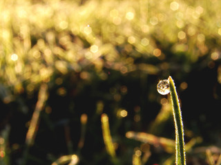 dew on grass peak