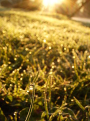 morning light on dew