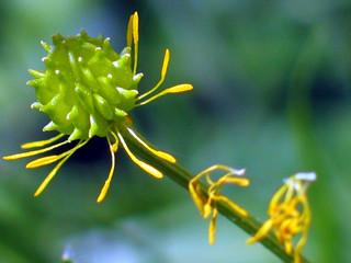 fin de fleur naissance du fruit