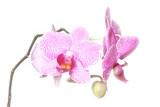Fototapety wunderschöne orchidee