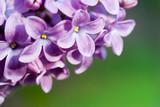 Fototapete Hintergrund - Frühling - Blume