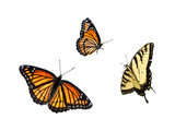 Fototapety butterfly collection 3 for 1
