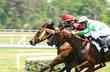 chevaux de course - 646314
