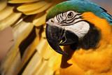 Fototapete Parrots - Vögel - Vögel