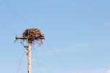 birds nest on pole poster