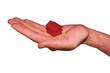 main tenant une maison