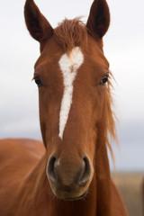 equino