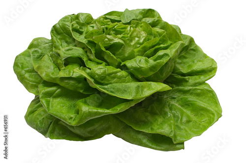 butterhead lettuce w/ path