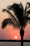 tropical sunset in mexico with palm tree poster