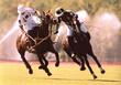 Fototapeten,polo,pferd,pony,reiter