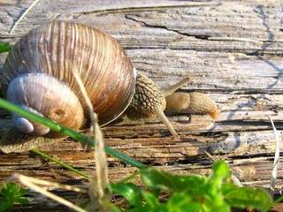 snails meeting