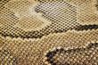 textures – snakeskin #04