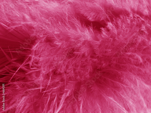 plumes roses